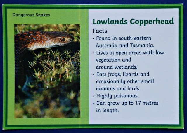 Dangerous Snake Fact Cards from Twinkl Resources. The Lowlands Copperhead