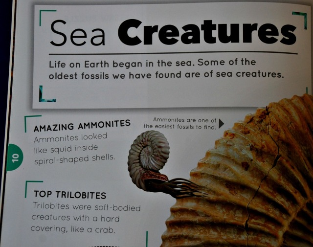 Rock Explorer books Fossils. Sea Creature page