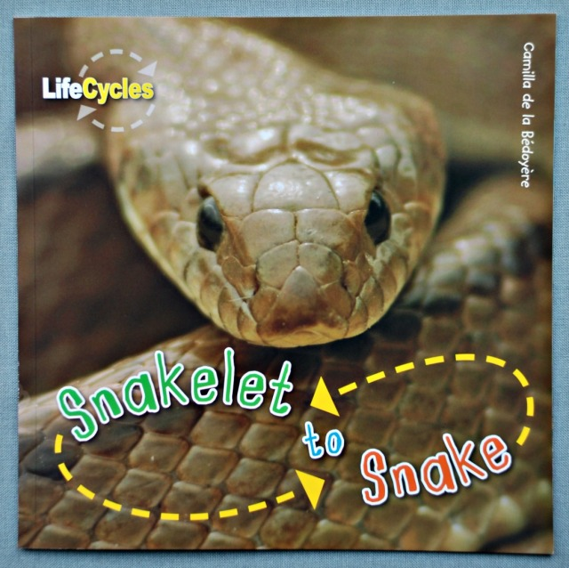 Snakelet to Snake Life Cycle book by QED publishing