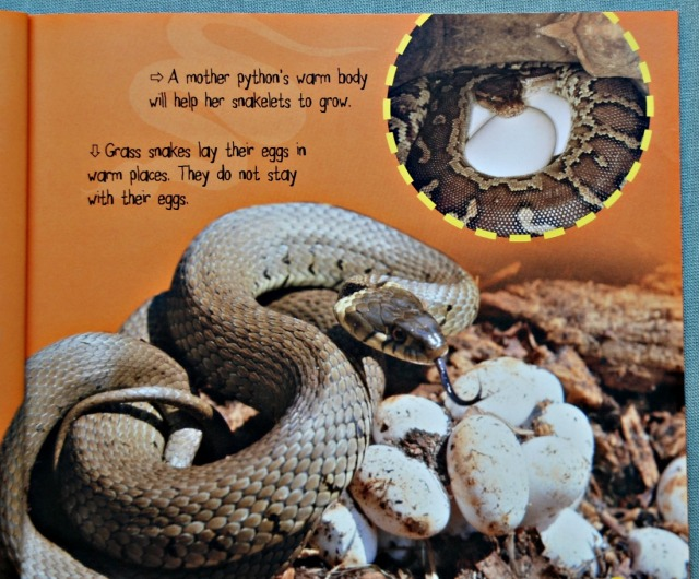Snakelet to Snake Life Cycle book produced by QED publishing