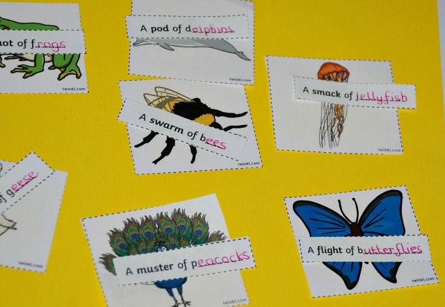 selecting the animal and finding the correct matching phrase from the Collective Noun Matching set from twinkl resources