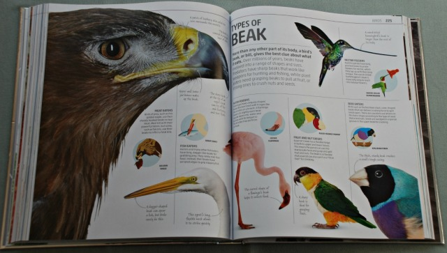 DK Explanatorium Nature book. Id filled with stunning close of phootos of animals