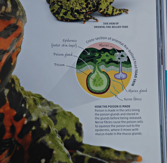 DK Explanatorium Nature book includes lots of fasinating detailed facts