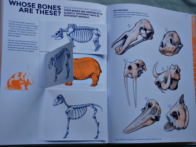Who Owns These Bones. A book wich shows the different skeleton structure of many different animals