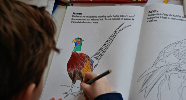Colouring Birds book by Sally MacLarty. The Pheasant picture