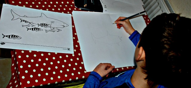drawing sharks using a colouring page as a starting point. Colouring page downloaded from Twinkl Rresources