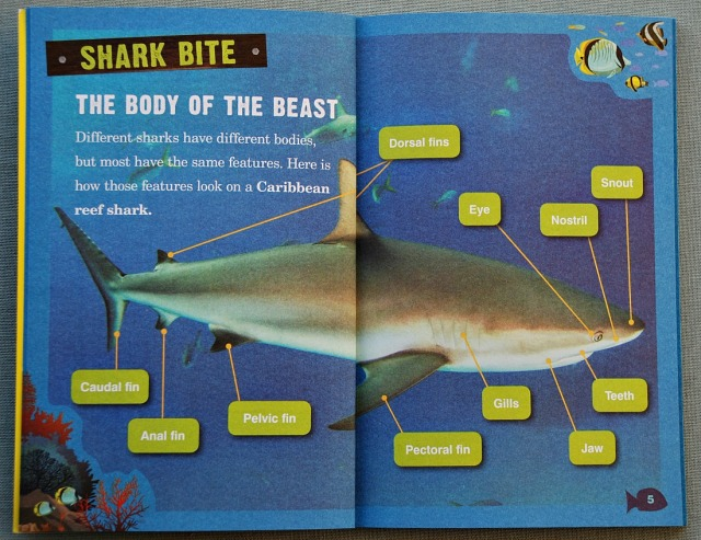 Sharks. Animal Planet Chaper Book. The Body of the Shark