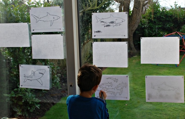 Tracing lots of different shark pictures