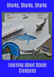 Shark Resources downloaded from Twinkl Resources website. Great for an Ocean themed topic