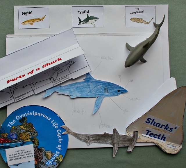 Sharks Resources from the Twinkl Resorces website