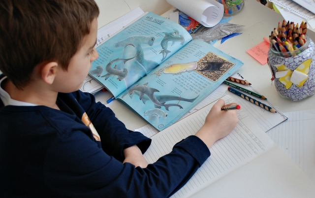 Animal Shark Diaries a great book written as a shark's diary, perfect to encourage kids to write a story