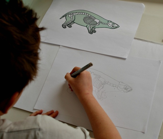 drawing a badger skeleton from the badger x-ray page on Twinkl Resources website