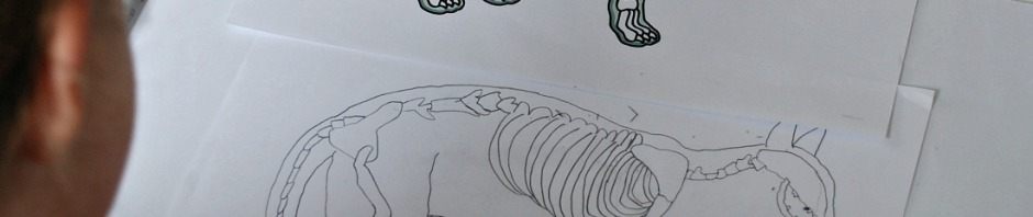 drawing her own cat skeleton using the vet x-ray pages from Twinkl Resources