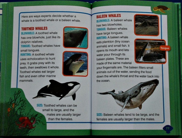 Dolphin Animal Planet chapter book includes this comparison between a toothed whale and a baleen whale