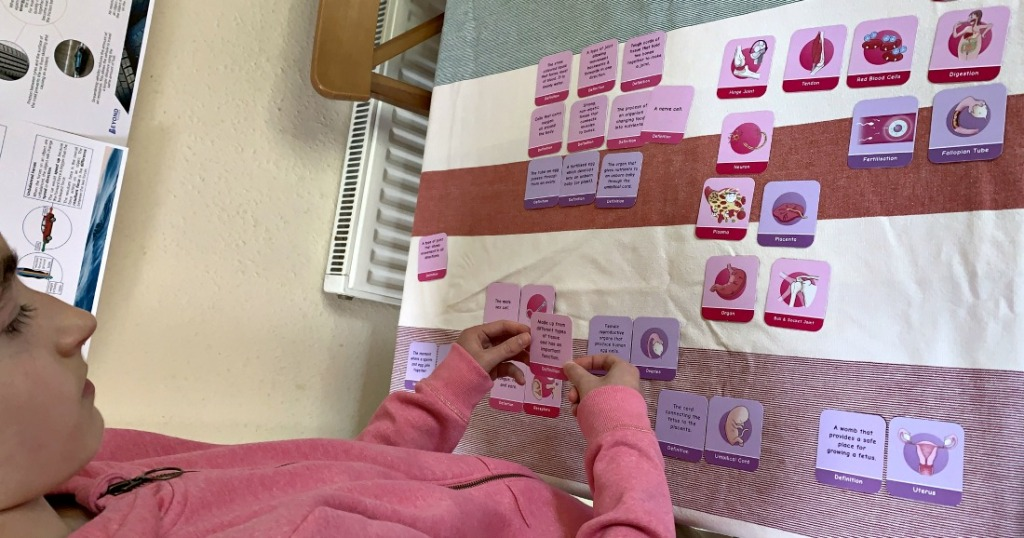 Biology matching pairs game From Oaka Books