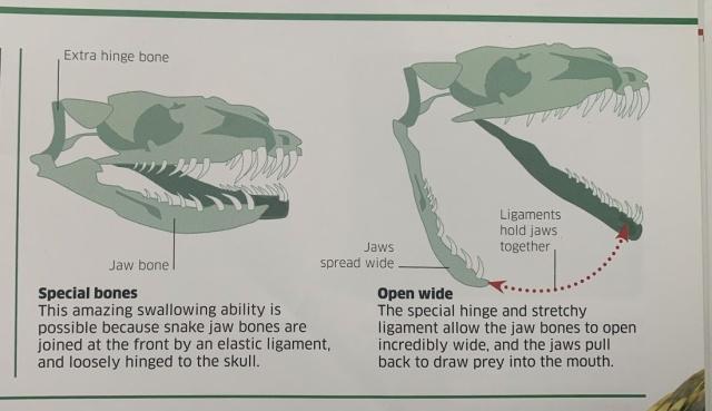 Knowledge Encyclopedia Dinosaur