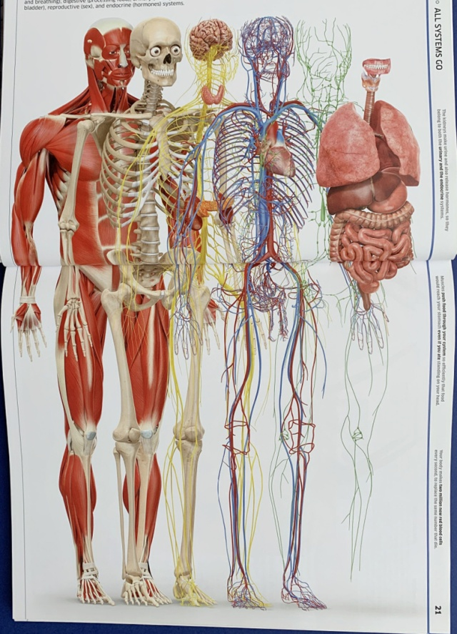 Knowledge Encyclopedia human Body from DK